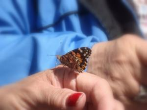 live butterfly sitting on a person's hand