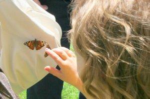 child enjoying a butterfly